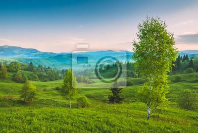Birken auf einem grünen Hügel