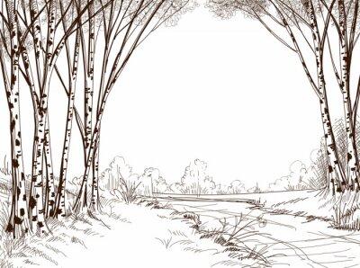 Bild Birkenwald, Grafik-Hintergrund