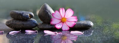 Bild Black spa stones and pink cosmos flower isolated on green.
