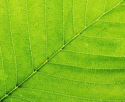 Bild Blatt einer Pflanze Nahaufnahme. Macro.