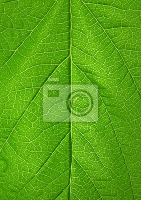 Bild Blatt Hintergrund