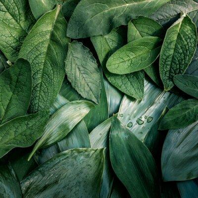 Bild Blätter Blatt Textur grün organischen Hintergrund Makro-Layout closeup getönten