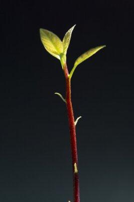 Bild Blätter der Setzlinge auf einem schwarzen Hintergrund.