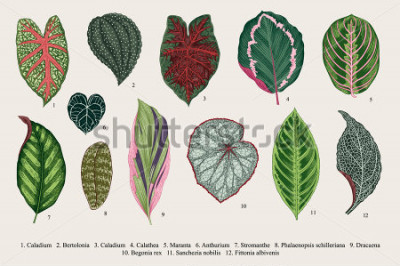 Bild Blätter setzen. Exoten Botanische Illustration des Weinlesevektors. Bunt.