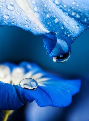 Bild blaue Blume mit einem Tautropfen