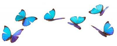 Bild Blaue fliegende Schmetterlinge.