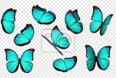 Bild Blaue Vektorillustration des Schmetterlinges. Stellen Sie blaue getrennte Schmetterlinge ein. Insekten Lepidoptera Morpho amathonte.