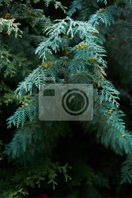 Blauer Zweig mit Tau