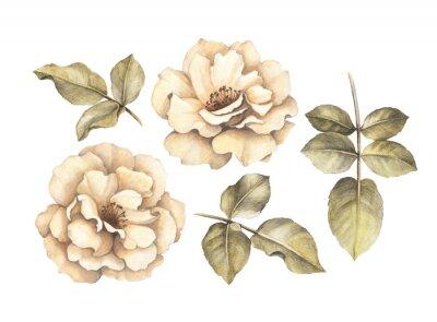 Bild Bleistiftzeichnung von Rosen