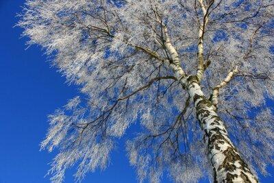Bild Blick in den Winterhimmel