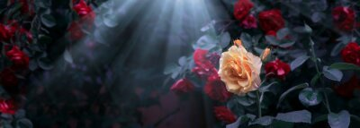 Bild Blooming yellow and red rose flowers and moon light rays in mystical garden on mysterious fairy tale summer floral background, fantasy nature dreamy landscape toned in low key, dark tones and shades