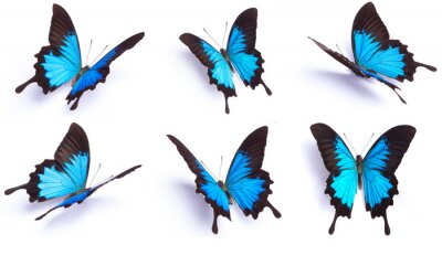 Bild Blue and colorful butterfly on white background