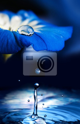 Bild blue flower with a dew drop