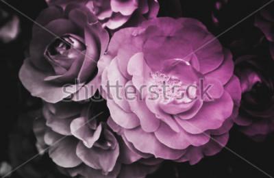Bild Blühende Blüte der schönen rosafarbenen Blume. Foto zeigt empfindlichen hellen wilden rosafarbenen Blumenbusch. Nahaufnahme, Makroansicht. Schwarz und weiß