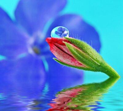 Bild Blume in Wassertropfen