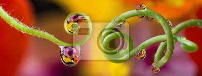 Bild Blume und Tautropfen