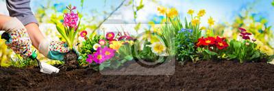 Bild Blumen in einem Garten pflanzen