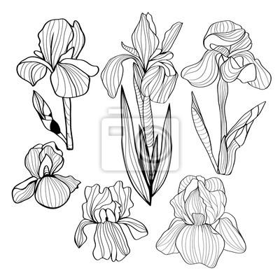 Blumen schwarz-weiß-satz von einer blume der iris leinwandbilder ...