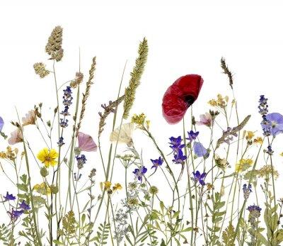 Bild Blumen und Kräutern
