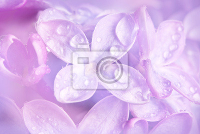 Bild Blumenhintergrund mit einem taufrischen lila