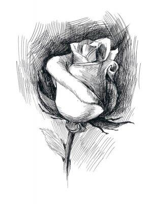 Bild Blumenskizze