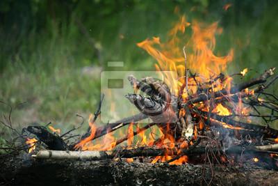 Bild Bonfire Lagerfeuer Feuer Sommer Wald Natur Feuer