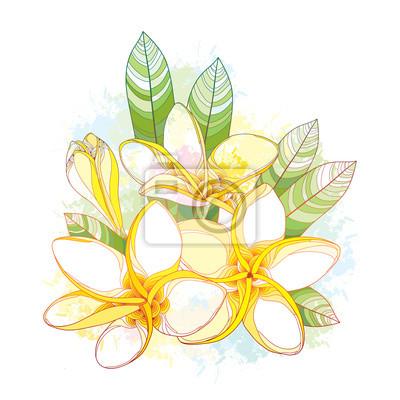 Bouquet mit verzieren plumeria oder frangipani blume, knospe ...