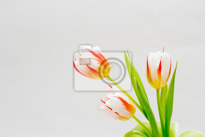 Bild bouquet of tender tulips on a white background