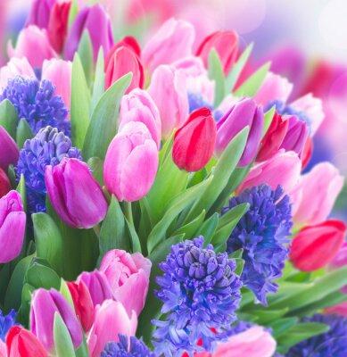 Bild Bouquet von blauen Hyazinthen und Tulpen
