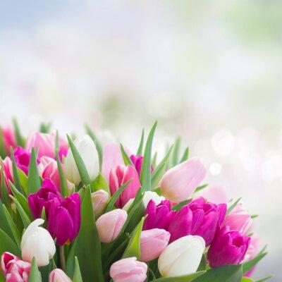Bild Bouquet von rosa, lila und weißen Tulpen