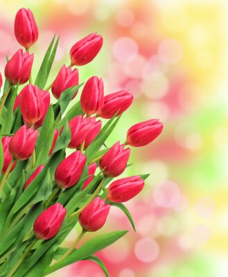 Bild Bouquet von rosa Tulpen auf hellem Hintergrund der Natur