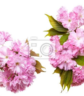 Bild brach of sakura