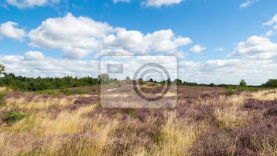 Bretziner Heide im August Mecklenburg
