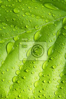Buche Blatt mit Regentropfen