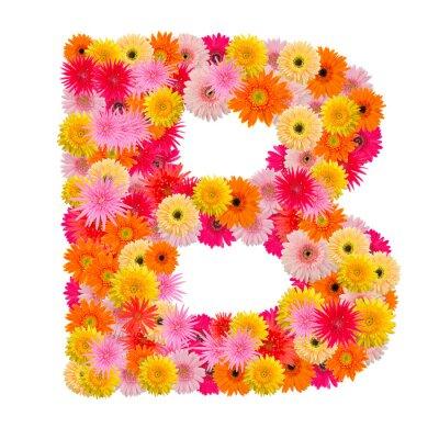 Bild Buchstabe B Alphabet mit Gerbera isoliert auf weißem Hintergrund