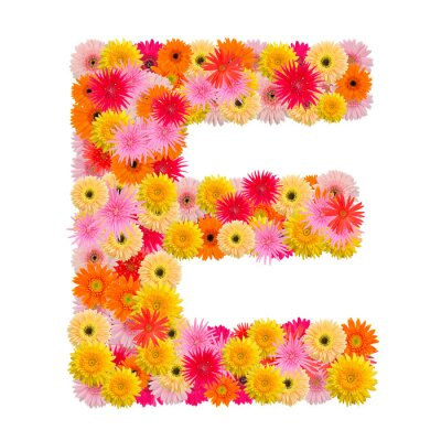 Bild Buchstabe E Alphabet mit Gerbera isoliert auf weißem Hintergrund