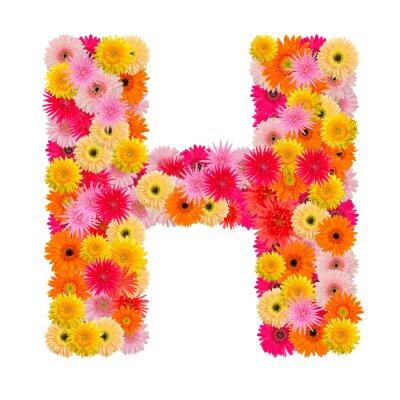 Bild Buchstabe H Alphabet mit Gerbera isoliert auf weißem Hintergrund