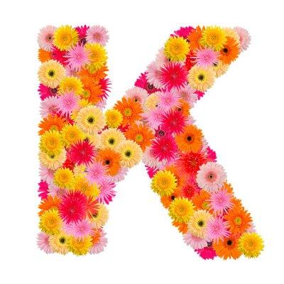Bild Buchstabe K Alphabet mit Gerbera isoliert auf weißem Hintergrund