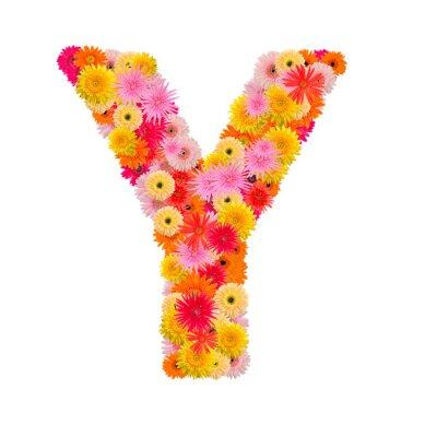 Bild Buchstabe Y Alphabet mit Gerbera isoliert auf weißem Hintergrund