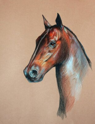 Bild Bucht-Pferdekopf