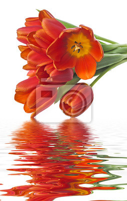 Bild bunch of red tulips on white background
