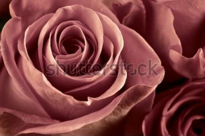 Bild Bündel der Marsala farbigen Rose blüht Nahaufnahme als Hintergrund. Weicher Fokus, flacher DOF. Gefiltertes Bild.