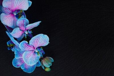 Bild Bündel violette Orchideen