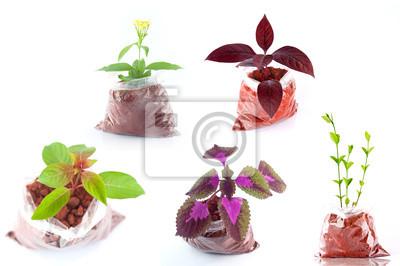 Bild bunt verzierten Pflanze isoliert Satz