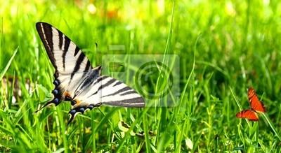 Bild Bunte exotische Schmetterlinge auf weißem Hintergrund