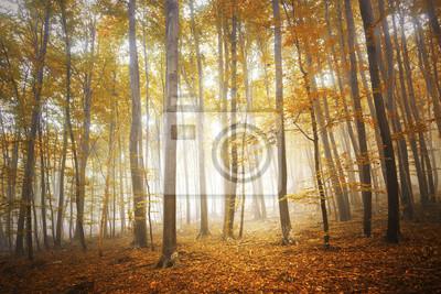 Bunte Herbst Jahreszeit nebligen Wald Baum Landschaft.