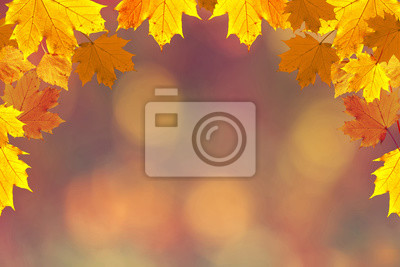 Bunte Herbstsaison verlässt auf undeutlichem bokeh Kopienraumhintergrund. Selektiver Fokus verwendet.