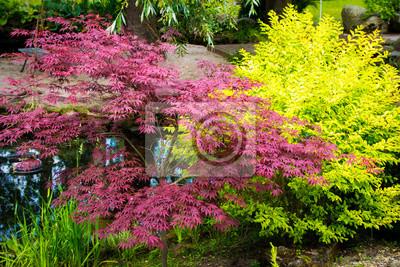Bunte Sträucher In Einem Japanischen Garten Leinwandbilder Bilder