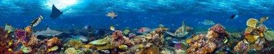 Bild Bunte super breite Unterwasser-Korallenriff Panorama-Fahne Hintergrund mit vielen Fischen Schildkröte Hai und marine Leben