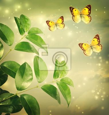 Butterflies on Green Star Lichter Hintergrund
